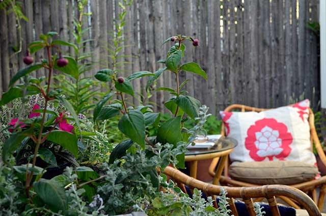 Fuchsia and thyme