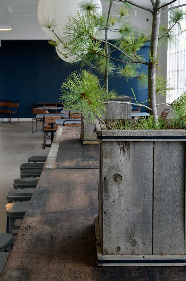 Blue wall and reclaimed wood