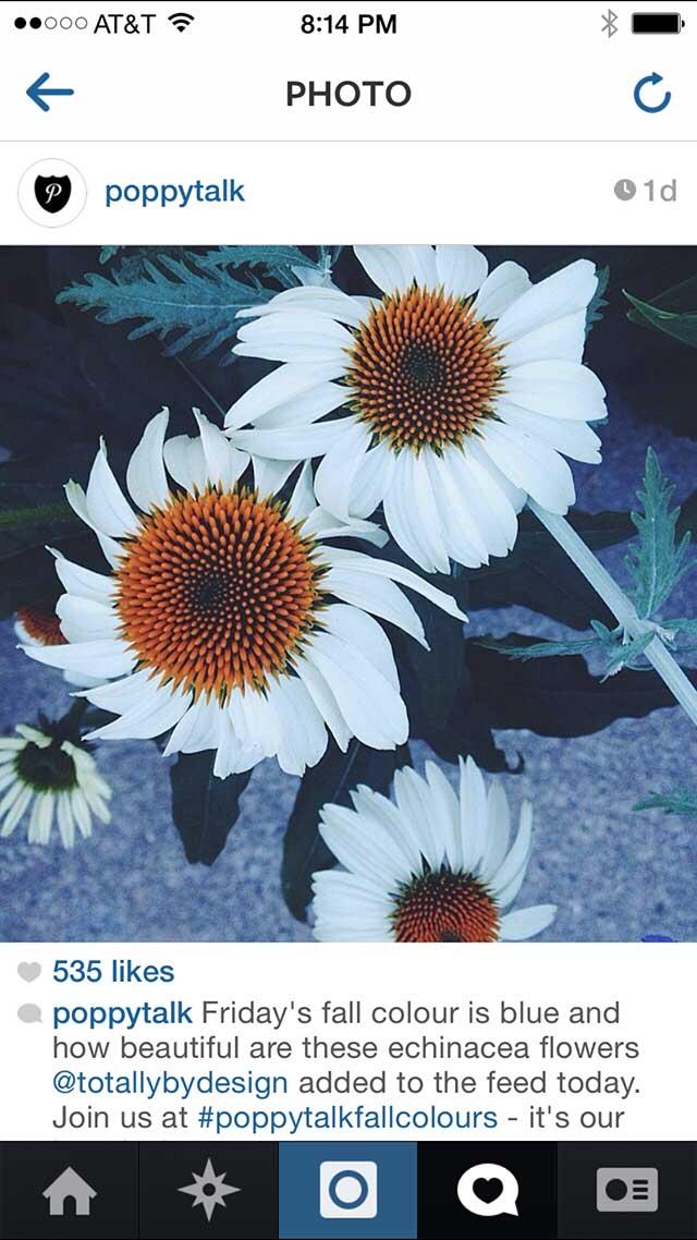Echinacea form my garden
