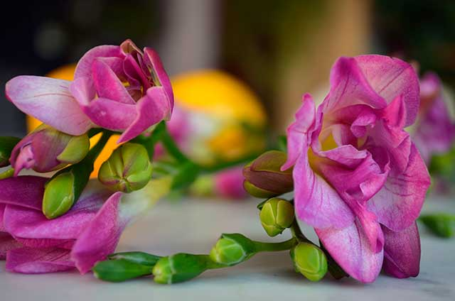 pink freesia and Meyer lemon