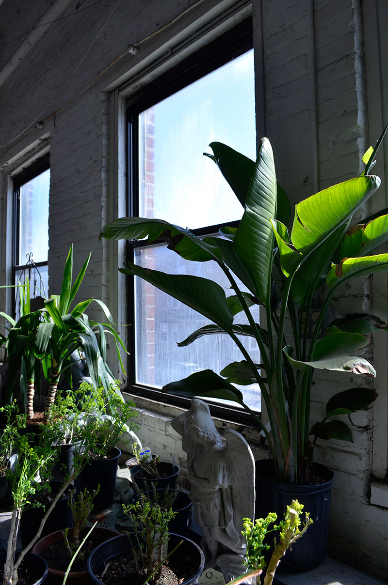 Banana plant / totally by design