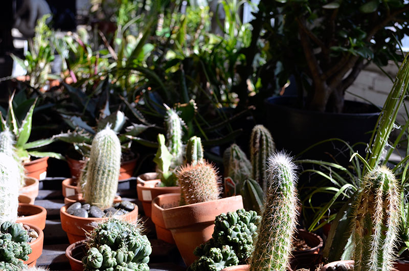 Cacti / totally by design