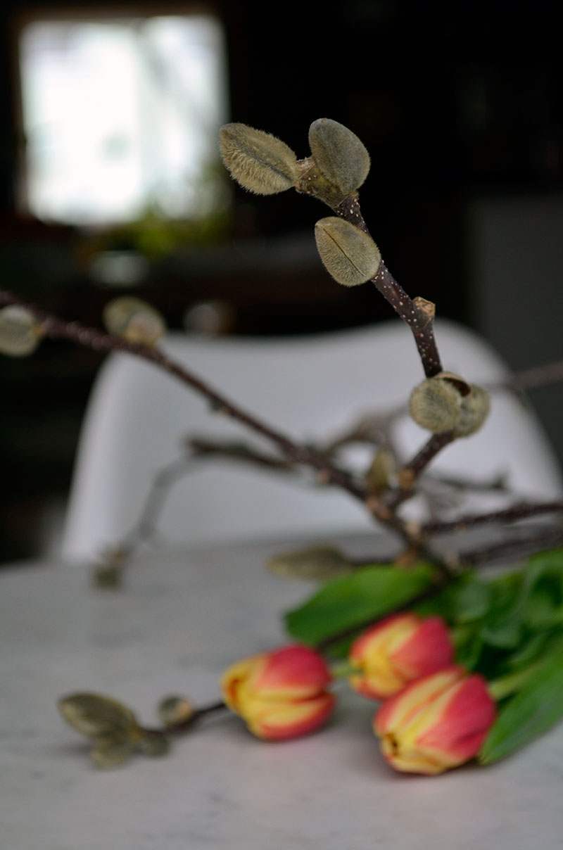 Magnolia branches and tulips/ totally by design