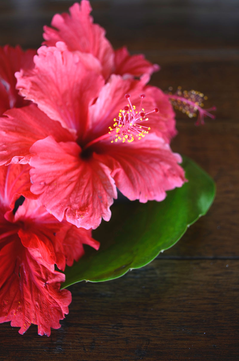Tropical blooms | Totally by Design