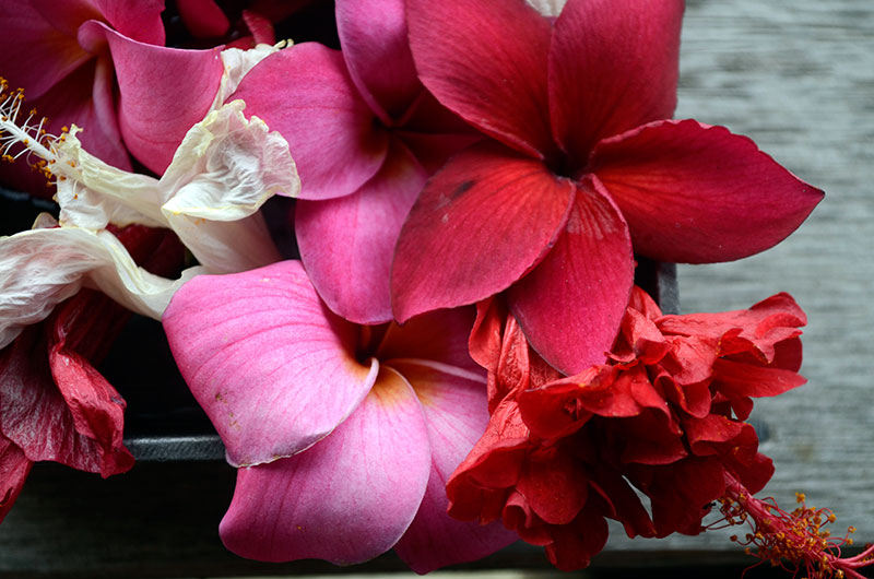 Tropical blooms   Totally by Design