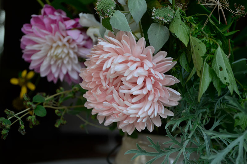 Aster and Dahlia | totallybydesign