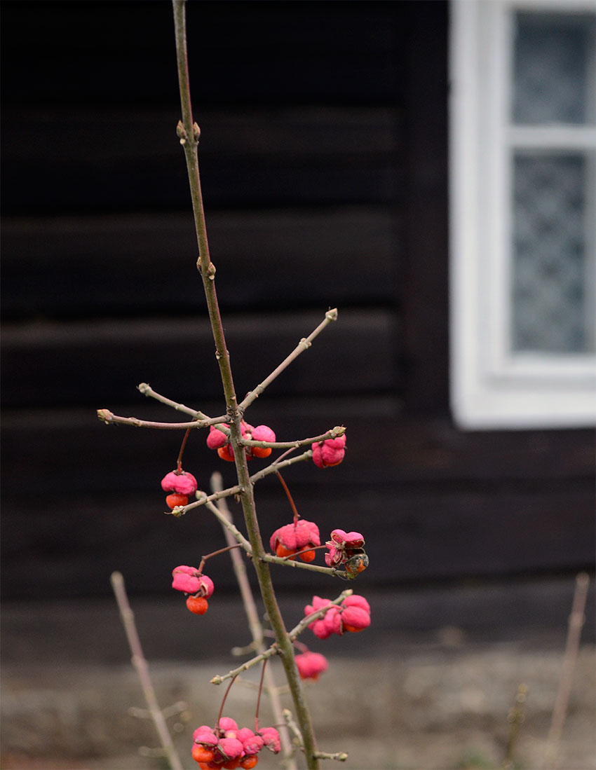 Log cabin and berries | totallybydesign.com