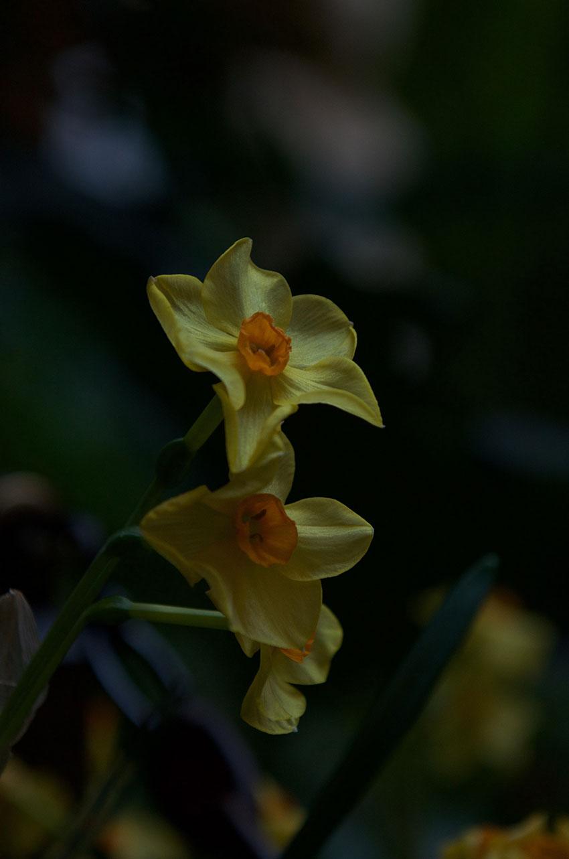Gardner Museum floral inspiration | totallybydesign.com