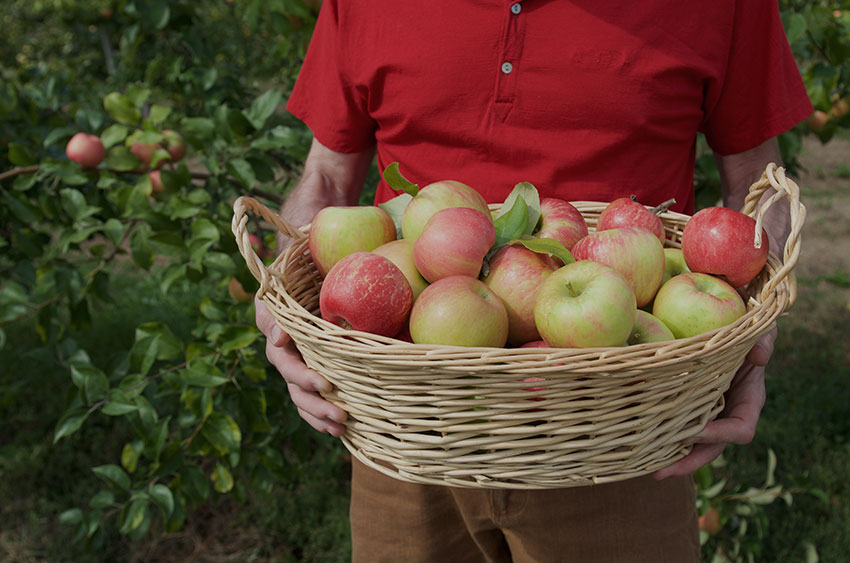 Apple picking | totallybydesign.com