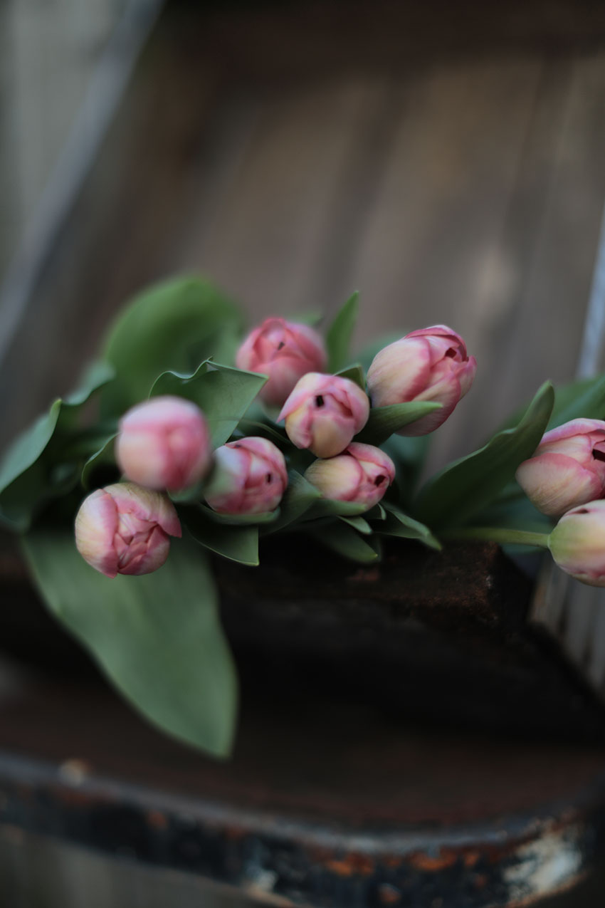 Tulips styling | totallybydesign.com